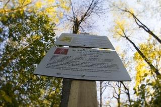 Infotafel am Baumwanderweg